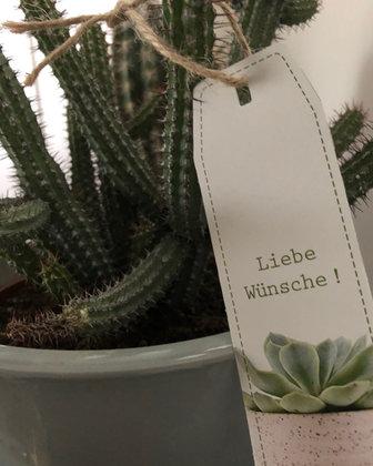 NEU-!!!-Cactus